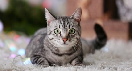 猫の気持ちは「しっぽ」と「しぐさ」でわかる!もっと猫と仲良くなる方法